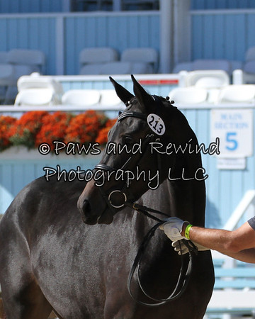 Tuesday Dixon Oval:  Class 105 Two Year Old Fillies (Born 2011)