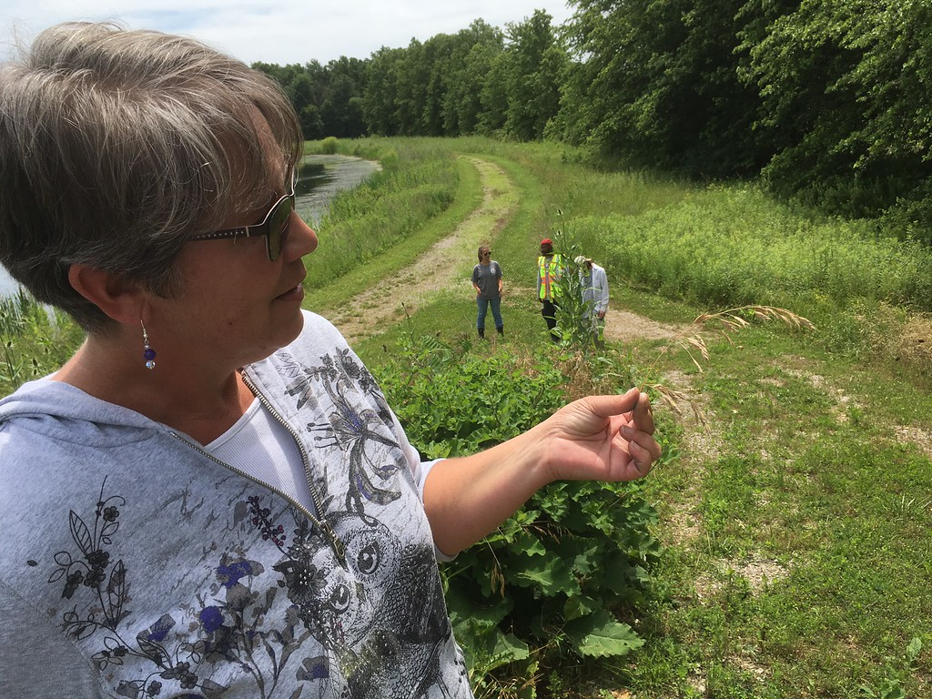 . Richard Payerchin - The Morning Journal <br> Lyn Ickes, watershed specialist in the Lorain County Community Development Department, shows shows wild oats she found at the Margaret Peak Nature Preserve on June 28, 2017. The Eaton Township preserve is a hidden gem for birders, hikers and anyone who wants to experience the outdoors. Behind Ickes are members of the Black River Civilian Conservation Corps, a grant-funded group that works on habitat restoration around the county.