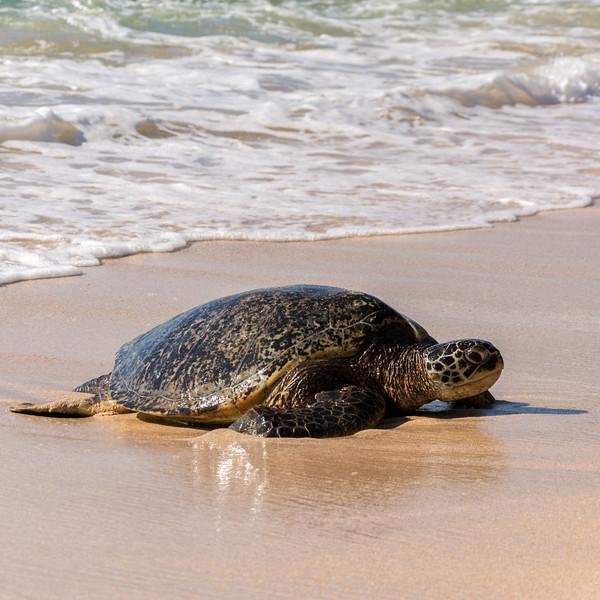 hawaii002.jpg