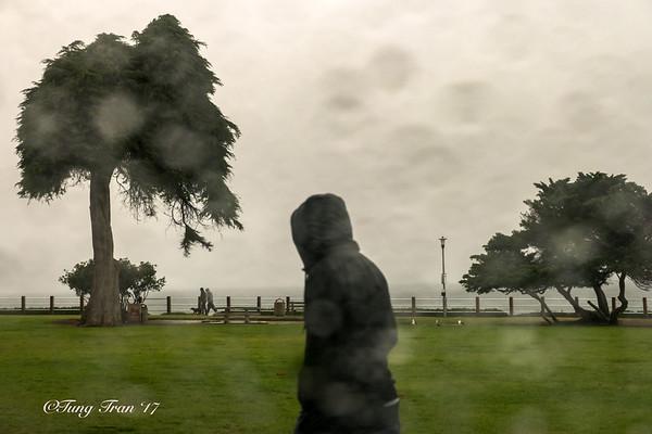 Flowers - San Clemente