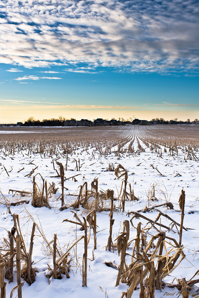 Cloudy Corn