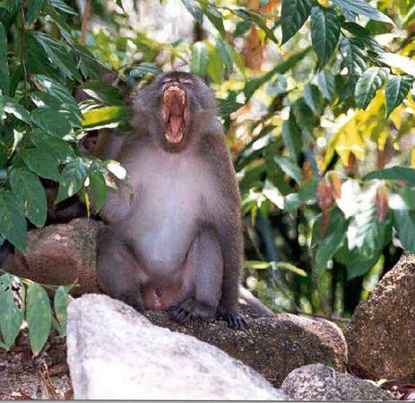 Angry Monkey.jpg