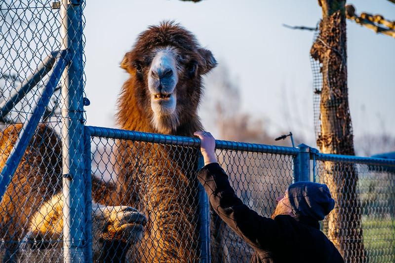 Tonis Zoo-0203.jpg