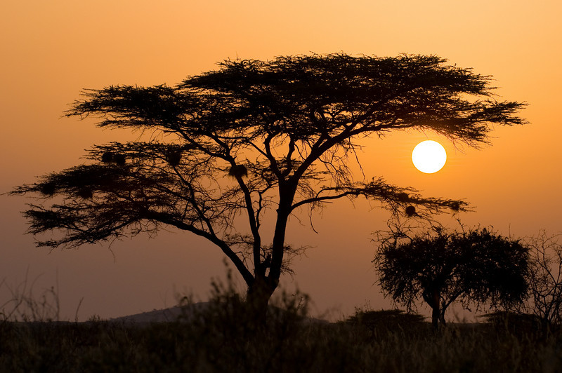 Shaba Sunset JF2_3827.jpg