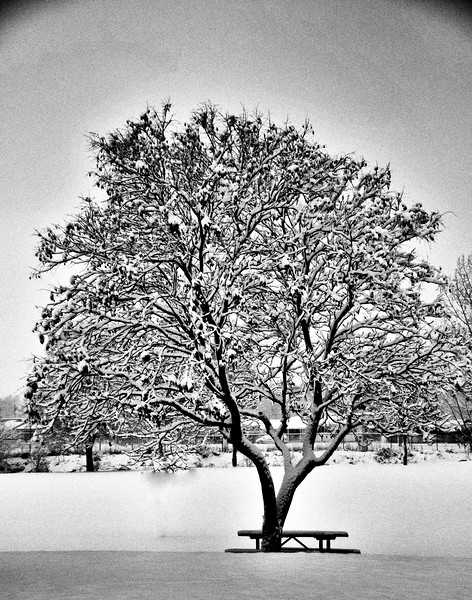 tree with snow.JPG