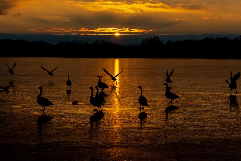 Sunset-Wingfoot-lake-geese6.jpg