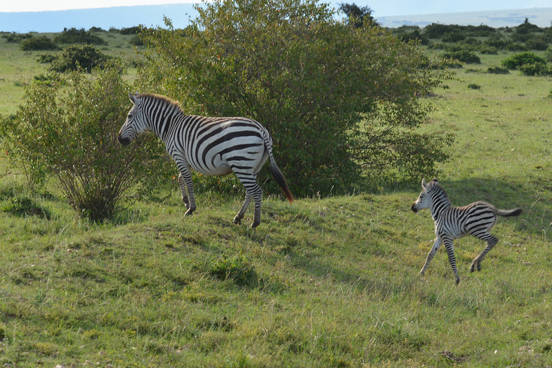 East Africa Safari 163.jpg