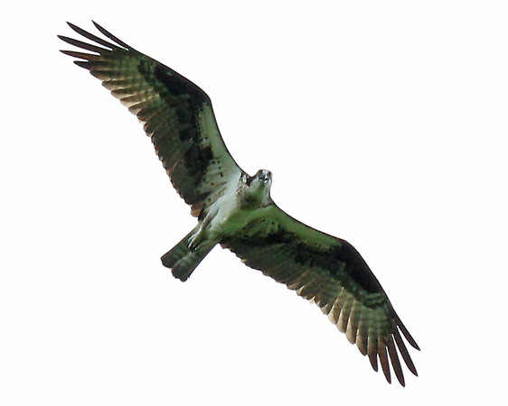 May 9, 2012, Osprey, Lackey High School