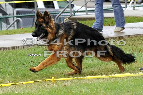 6 to 9 Month LSH Male