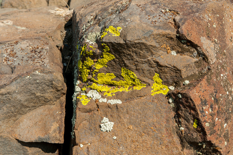 Lichen on rocks at an overlook over the Columbia River near Vantage, WA