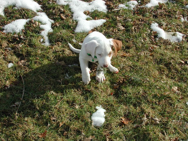 Feb 05- Puppies 031.jpg