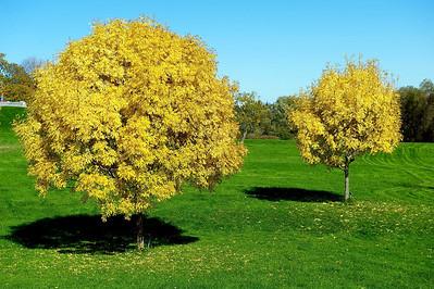 Ottawa Autumn