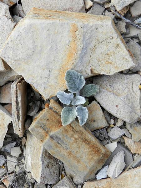 Rocks and plant 2.jpg