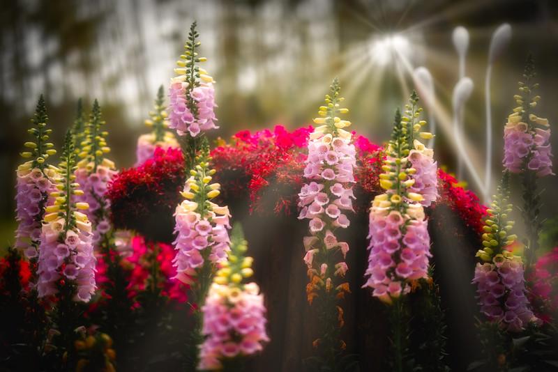 Flowers2.0