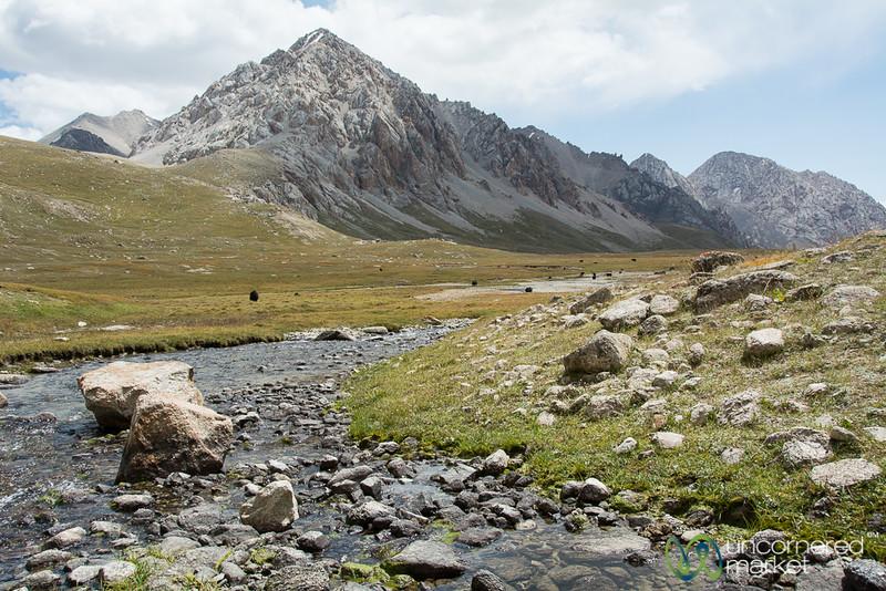 Yak Valley and Stream - Koshkol Lakes Trek, Alay Mountains of Kyrgyzstan