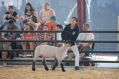 2019 OC FAIR MARKET SHEEP