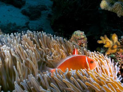 Australia/Coral Sea - June 2011