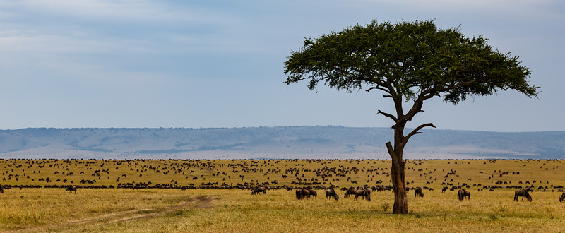 Kenya 2015-05183.jpg