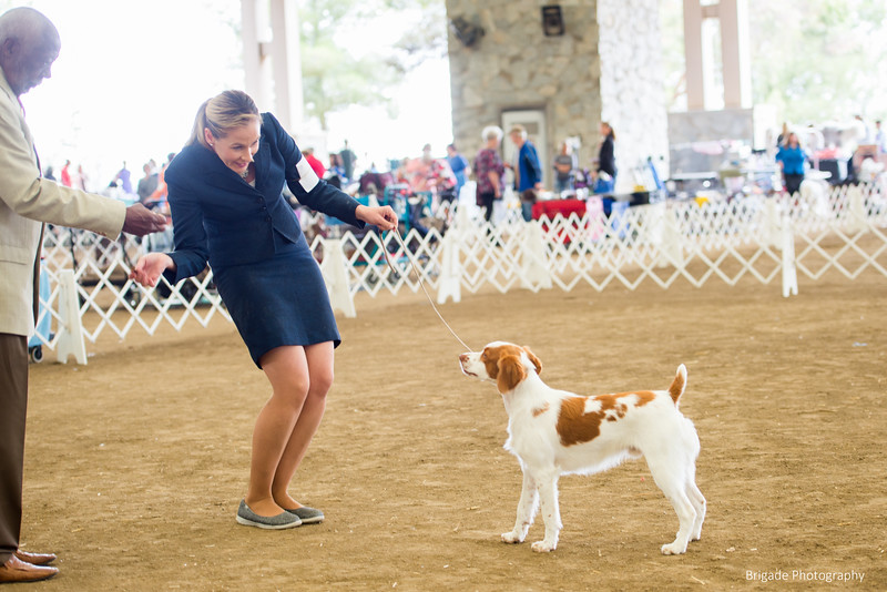 2019 Malibu Kennel Club-9689.jpg
