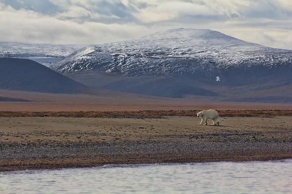 Dream Head Wrangel Island