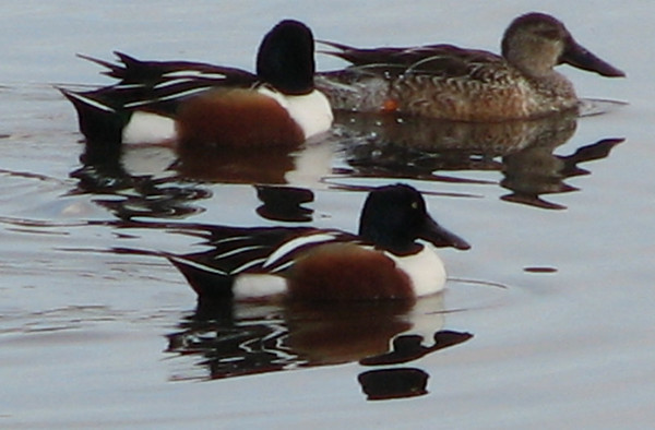 Murrieta, CA - Santa Rosa Plateau Ecological Reserve