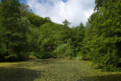 La forêt en été