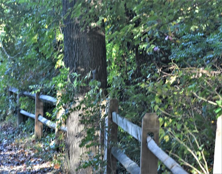 More Fall Fences.JPG