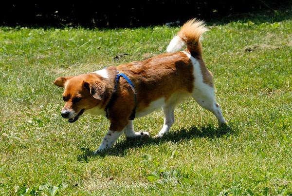 2010-06-28 Denville Dog Park