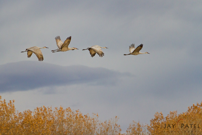 Bosque Del Apache, New Mexico (NM), USA
