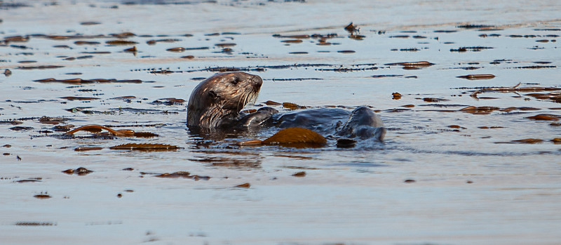 Morrow Bay Otters and AG Roosters-22.jpg