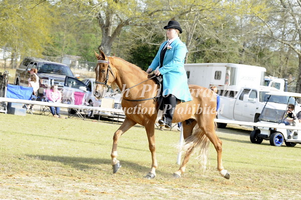CLASS 11 ALL DAY GAITED PLEASURE
