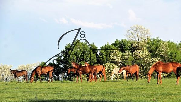 Mereworth Farm  - Spring Photographs