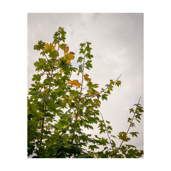 270_Autumn_10x10.jpg
