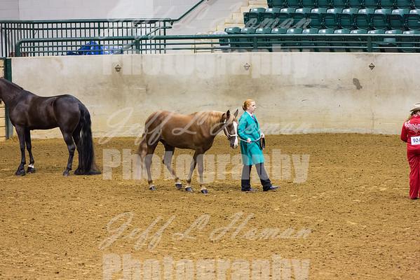 State Horse Show  Pleasure & Random Shots