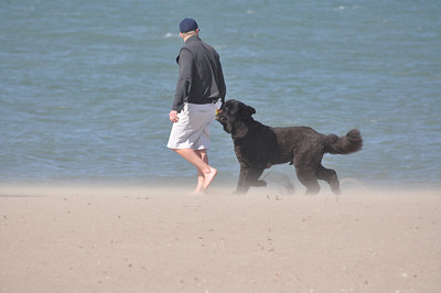 Newfoundland Dog  Photos - OK TO COPY