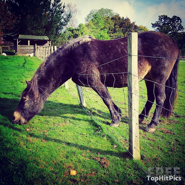 The grass is always greener! A cheeky Horse grazes from the other side of a fence. Pictured in Kent, United Kingdom.