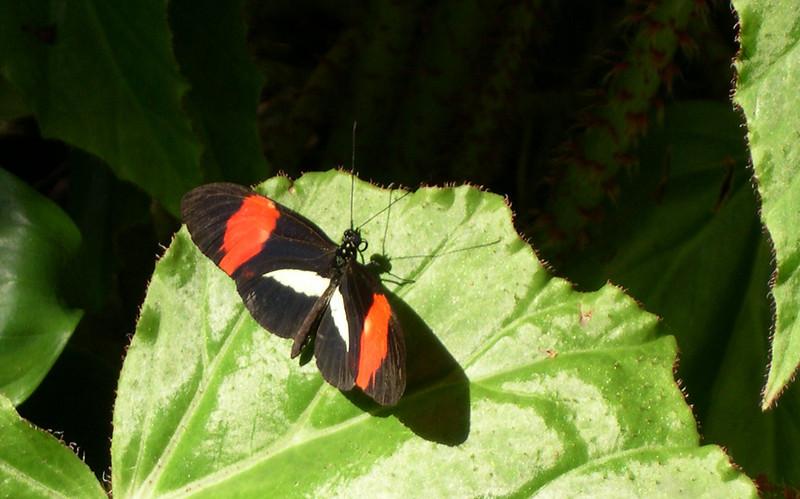 butterfly422.jpg