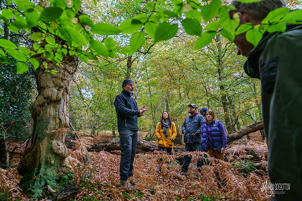 Woodland Ecology with the Field Studies Council