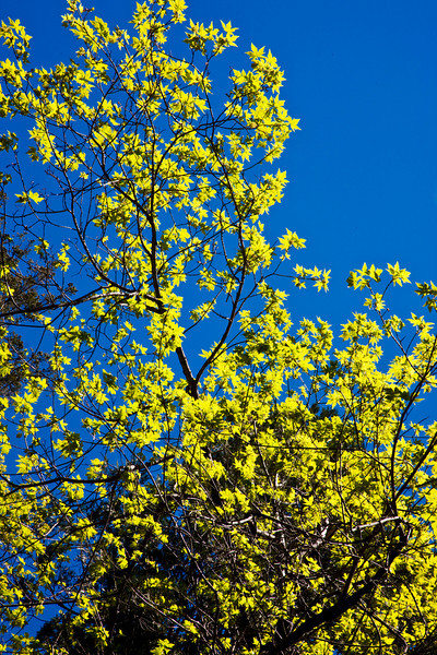 spring-trees-yosemite-national-park.jpg