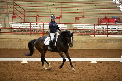 Horse 261