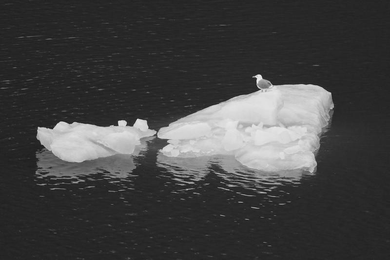 scenic cruising Liefdefd fjord, Polar icecap.jpg