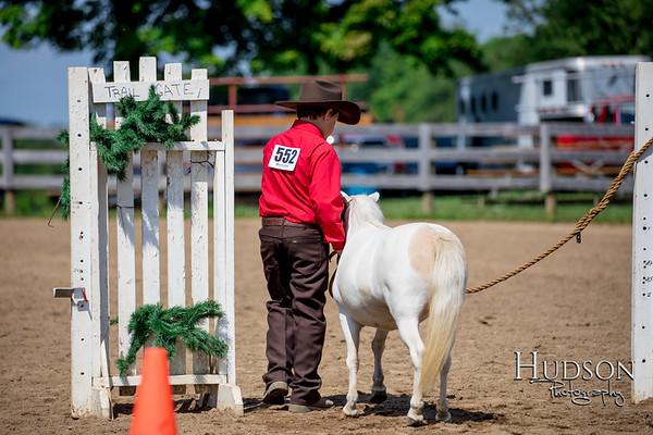 32 Mini Horse In Hand Trail Jr