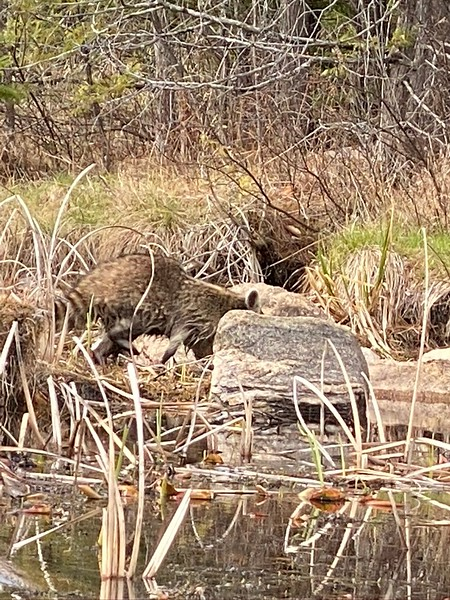 Stoney Lake GRANITE covid
