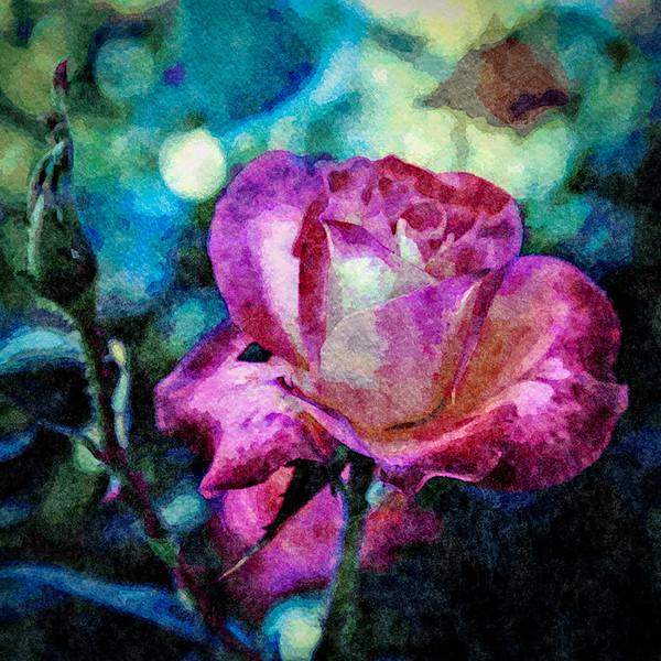 September 24 - Autumn rose.jpg