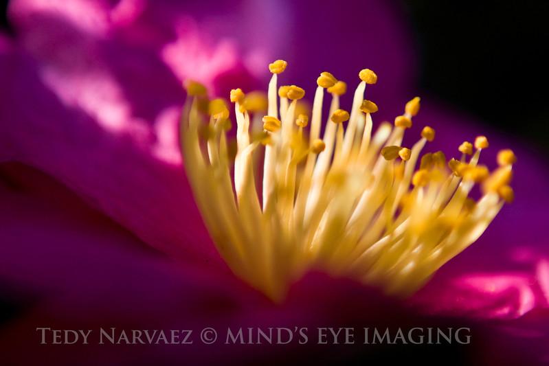 Picnic|Flower010.jpg