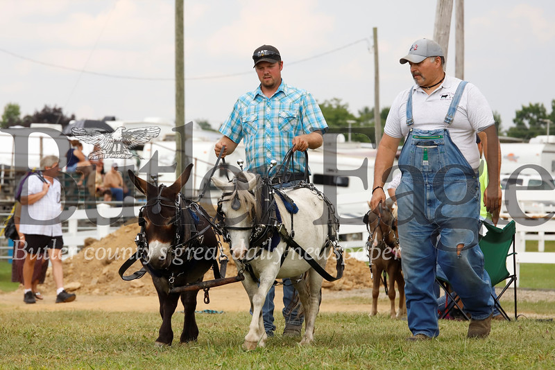 Troy Stewart (left) takes his minature donkey Bob and minature horse Magic for a practice walk along with Troy Stewart, prior to the double log pulling competition Monday. Seb Foltz/Butler Eagle