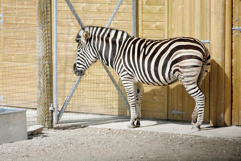 Newquay Zoo 134.jpg