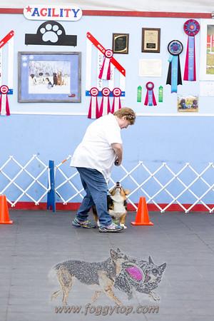 August 2017 - Golden Rule School For Dogs WCRL Trial