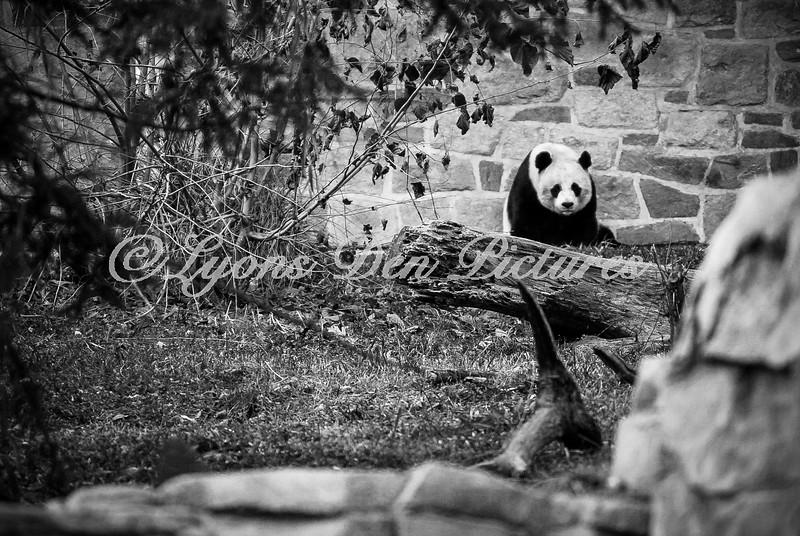 animalsportraits-8.jpg