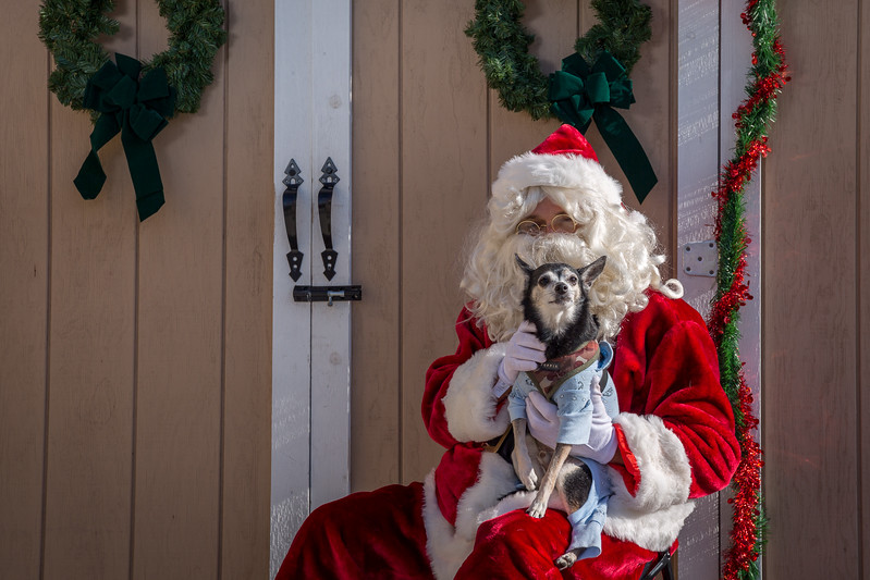 Pet Pictures With Santa-98.jpg